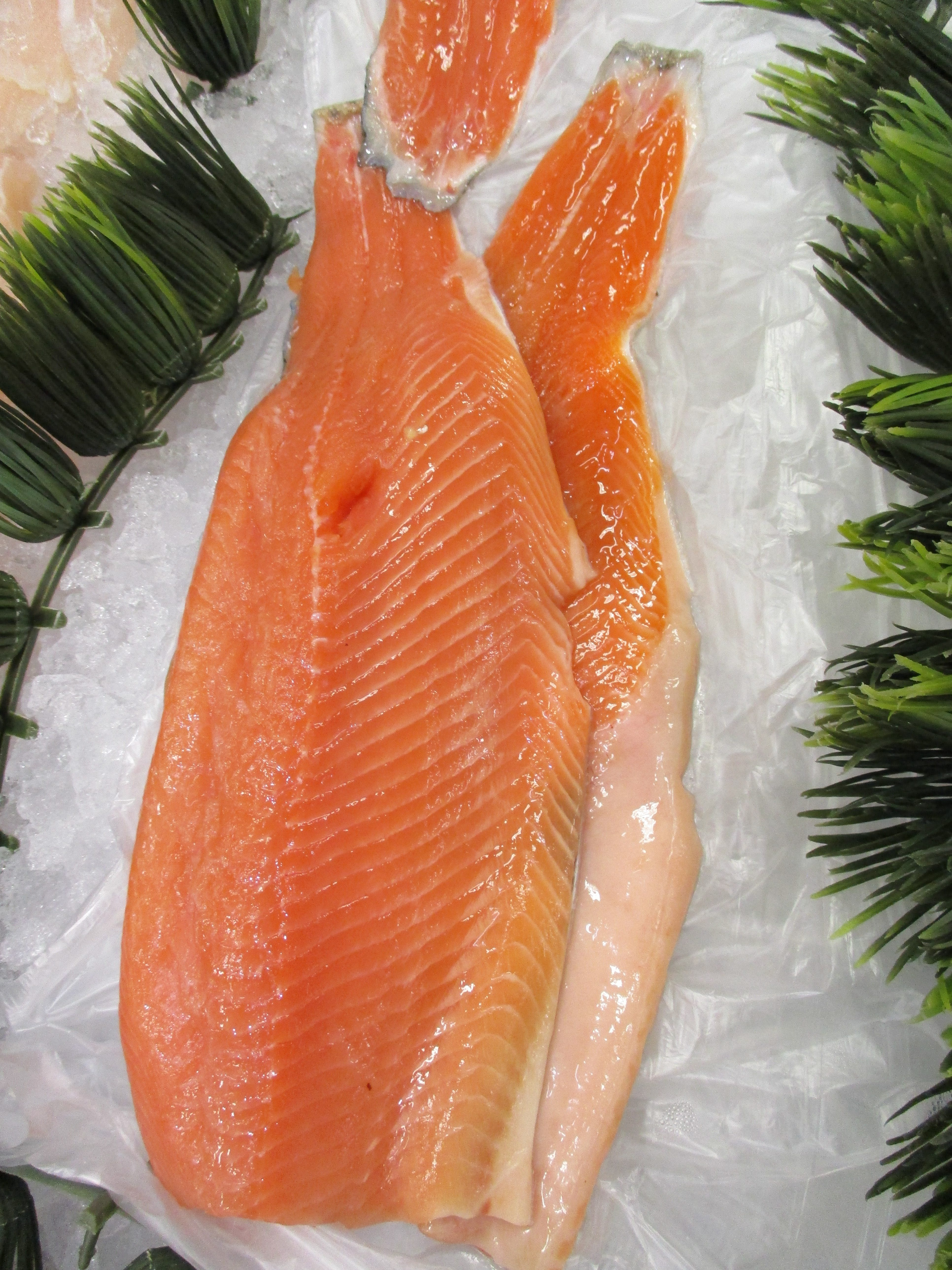 cut of fresh salmon